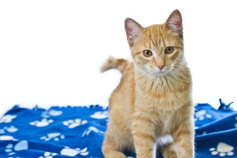 1202_Cats_115.jpg