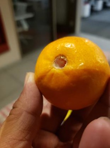 Fruit Guys Discrepancy Images