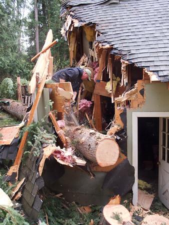Marshall Tree Damage Photos