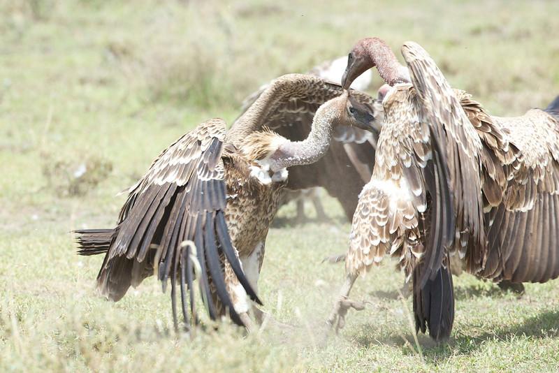 Serengeti_Feb_2013_FH0T6455.tiff.jpg