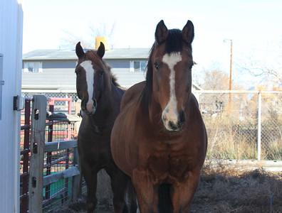Animals:  Horses and Donkeys