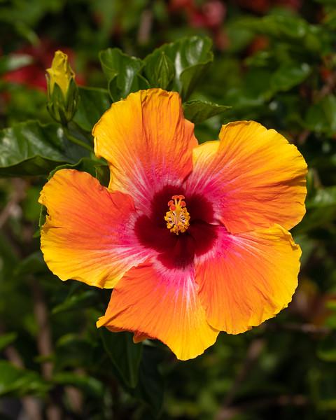 FineArt_Flowers_051520_0229.jpg