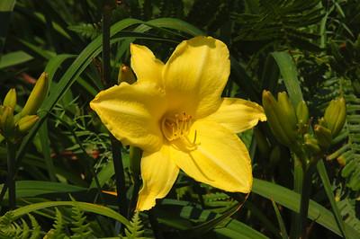 Acton Arboretum - Acton MA 07
