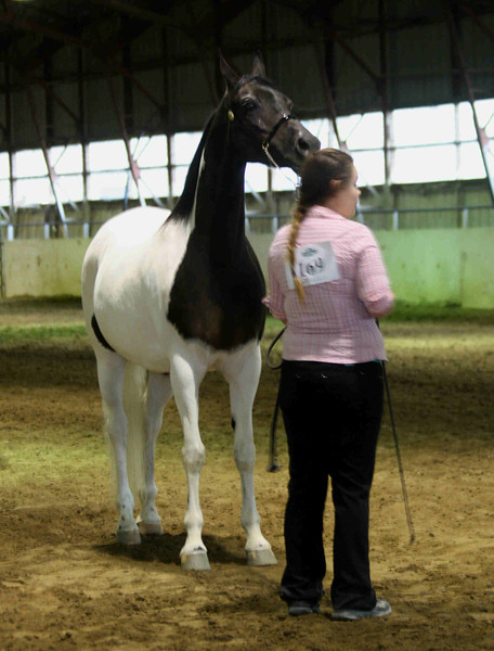 Melinda-Arabians