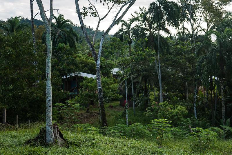 Urari, Panama-4.jpg