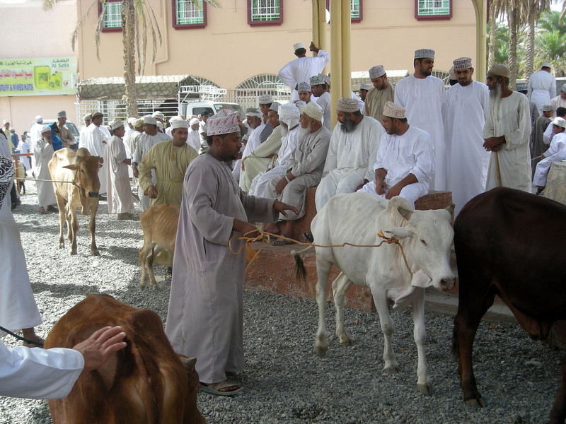 showing animals on Friday auction, Nizwa, Oman