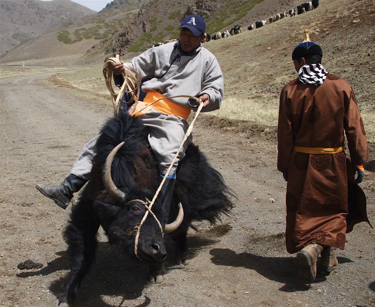 Yak Festival, Yolyn Am, Gobi Desert, Mongolia