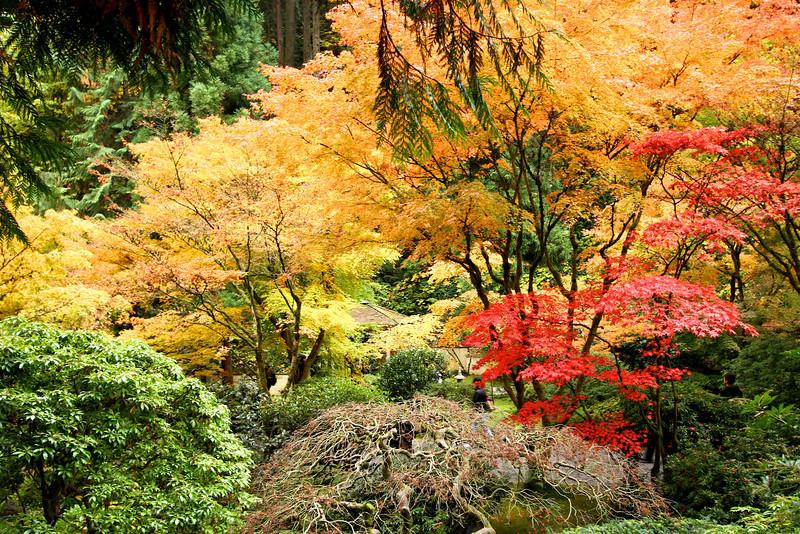 Portland Japanese Garden  11-11-11  3569.jpg