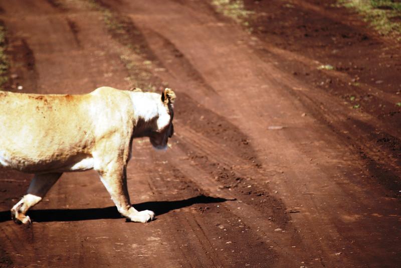 Ngorongoro (74).JPG