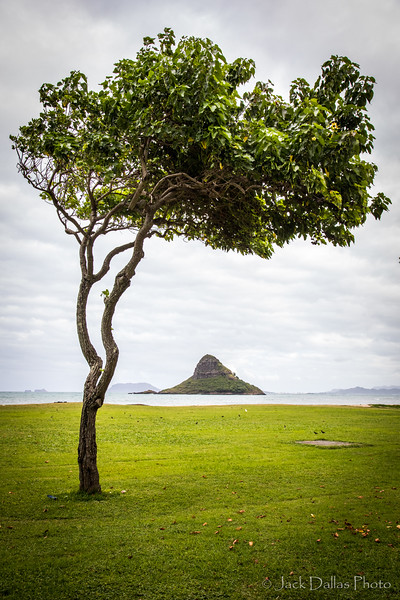 Oahu DF0A2480.jpg