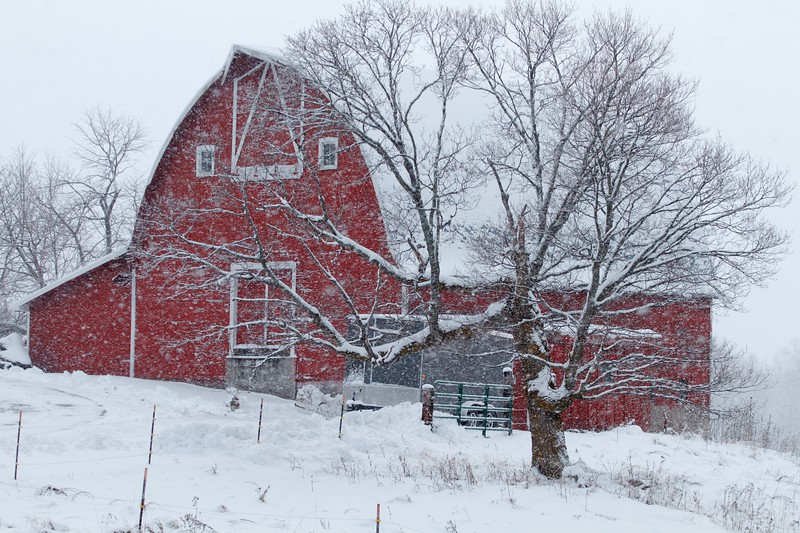 Barn red in snow CR47 Sax-Zim Bog MN IMG_8315.jpg