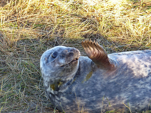 2013-12-01 Donna Nook Seals and Horseshoe point .