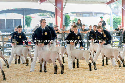 2017 OC Fair Market Sheep