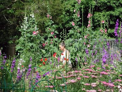 Daphne's Gardens