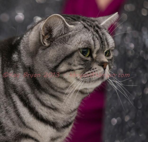 CatShow2014099_1.jpg