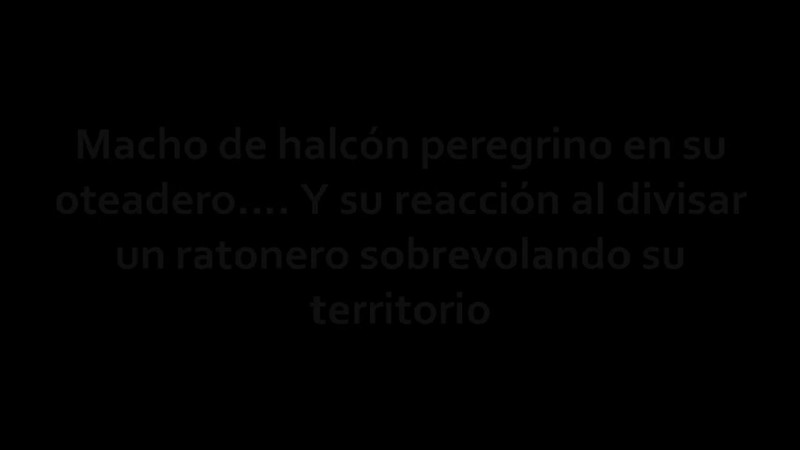 Peregrino.mpeg