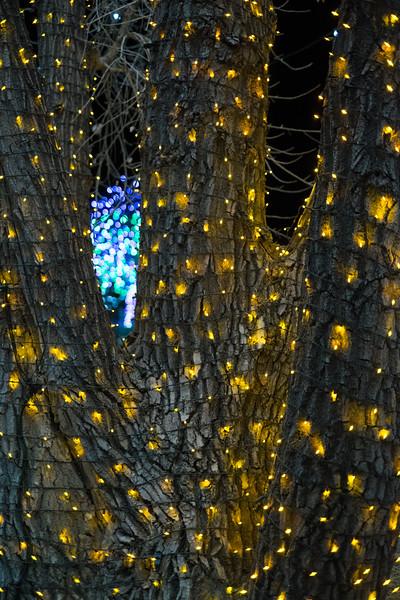 hudsongardenxmaslights-0970.jpg