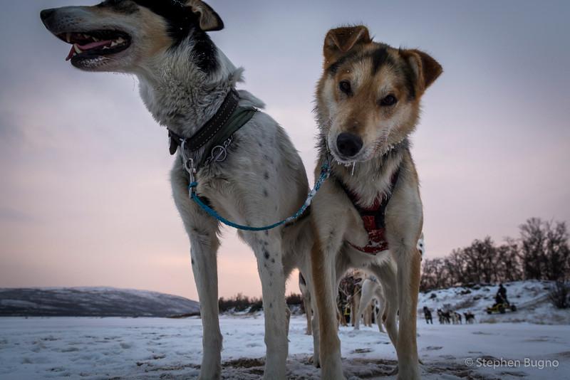Dog Mushing-9916.jpg