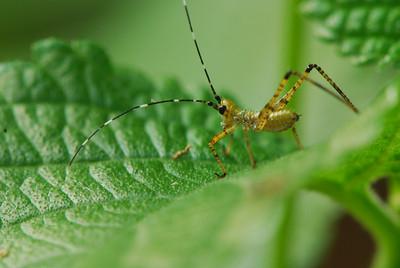 The Amazing Bug World