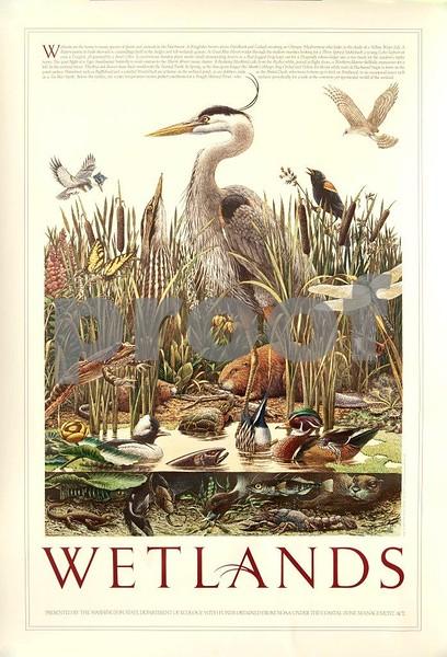 Wetlands, DOE 7230.jpg