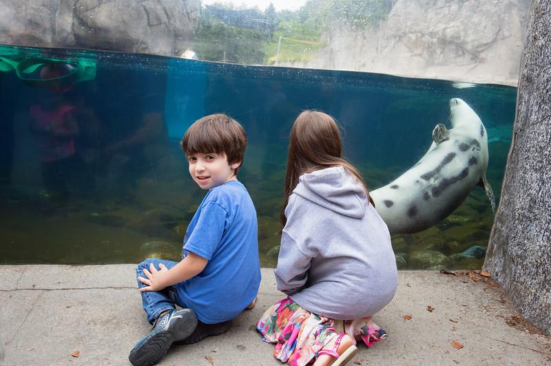 TripAdvisor Mystic Aquarium2-2-2.jpg