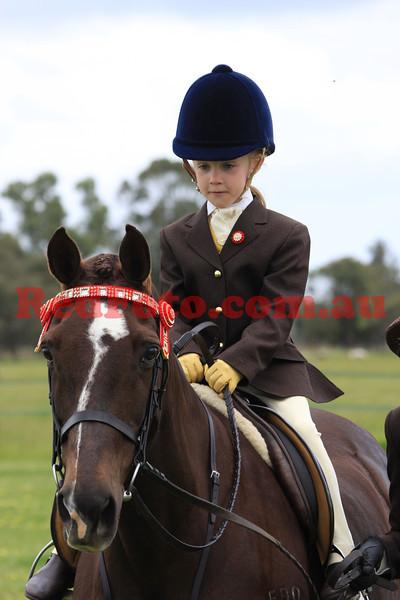 Veteran Horse Show