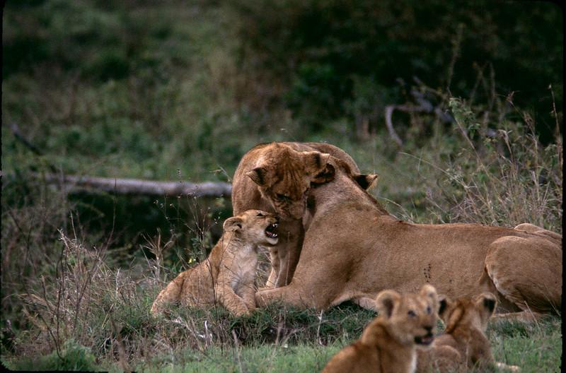 Kenya2_049.jpg