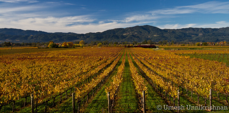 Napa Wineries 015.jpg