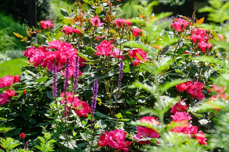 Philly Flowers 1.jpg