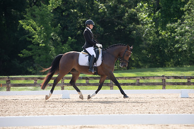 Horse 411
