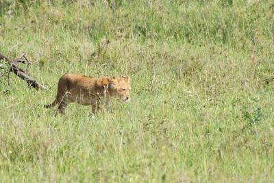 1494239978African-Safari-70.jpg