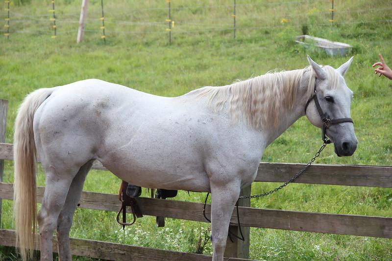 kars4kids_thezone_camp_girlsDivsion_activities_HorseBackRiding (28).JPG