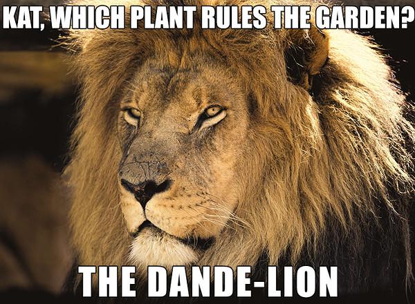 Dande Lion.jpg