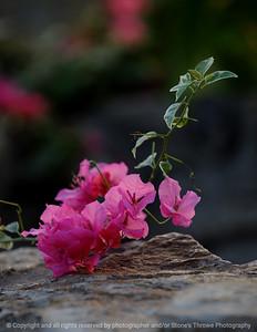 015-flower-dsm-14jan09-cvr-1193