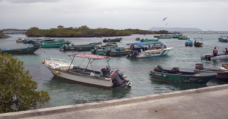 Boats in Puerto Vallamil harbor   (Dec 10, 2005, 11:35am)