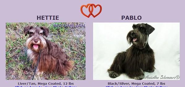 Hettie & Pablo Puppies DOB 10/20/2018