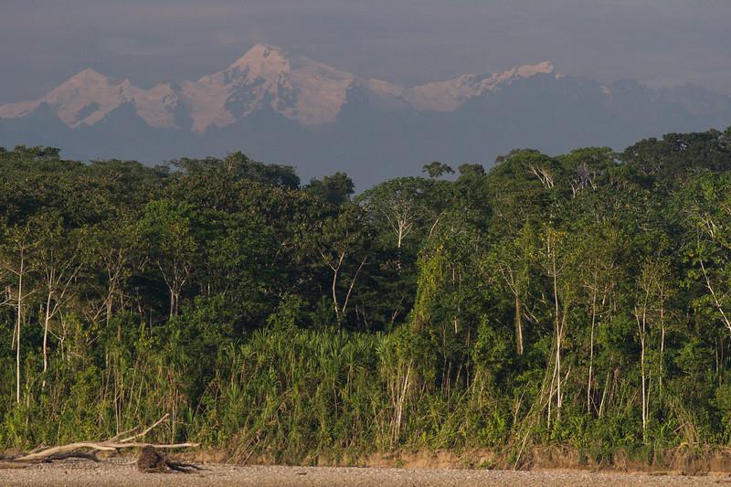 Rainforest98.jpg