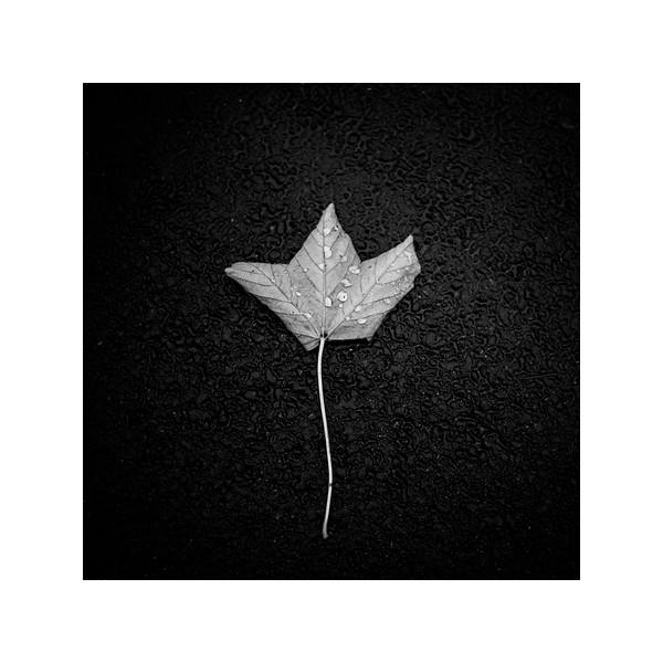 178_Leaf_10x10.jpg