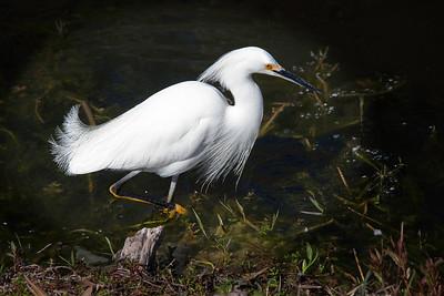 Everglades March 2010
