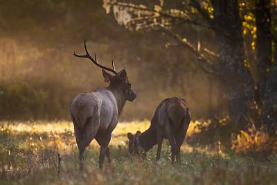 Elk Rut 2022