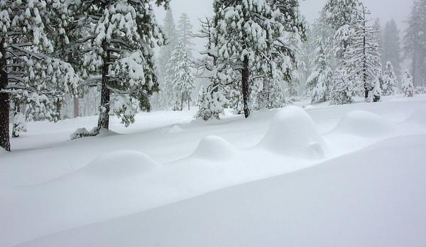 Taz in the snow