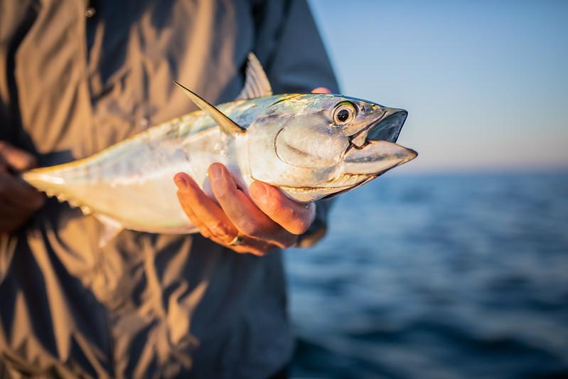 capecodfalsealbacorefishing.bencarmichael (5 of 13).jpg