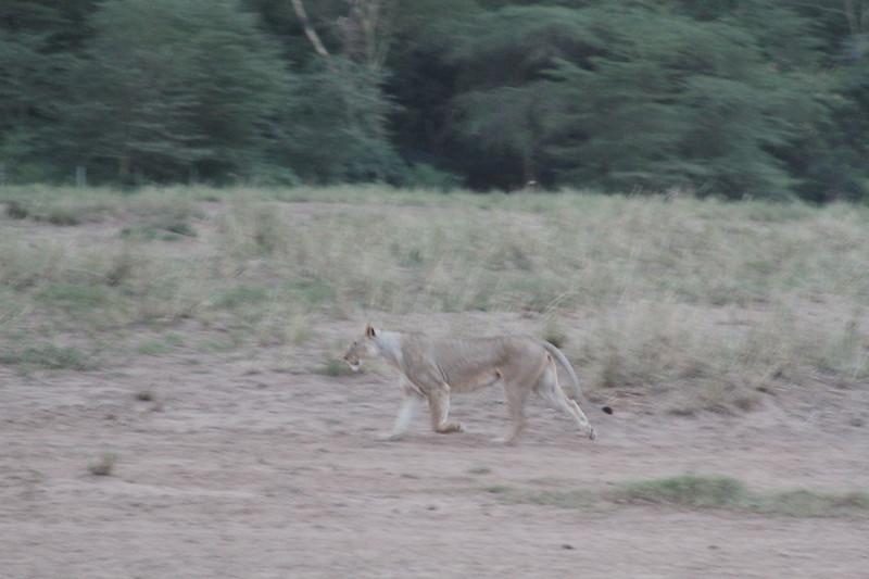 Kenya 2019 #2 1700.JPG