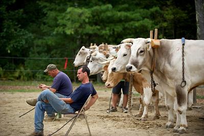 Bolton Fair 2010 - Oxen Pull 2800 lb
