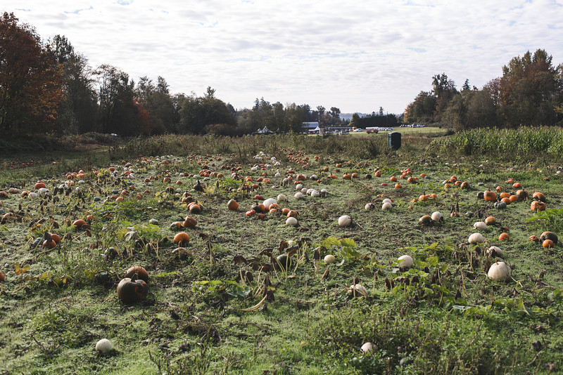 JLS_pumpkinpatch2018_017.jpg