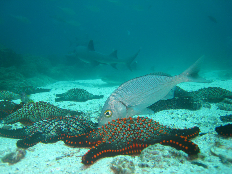 Diving in the Galapagos (147 of 392)
