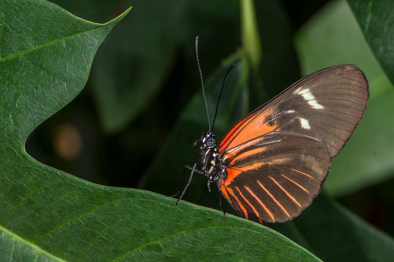 Butterfly Wonderland 5.jpg