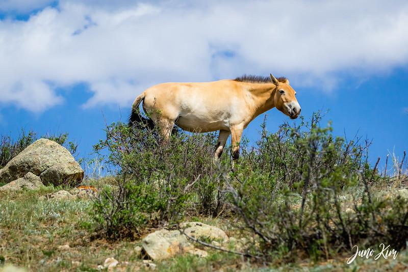Kustei National Park__6109442-Juno Kim.jpg