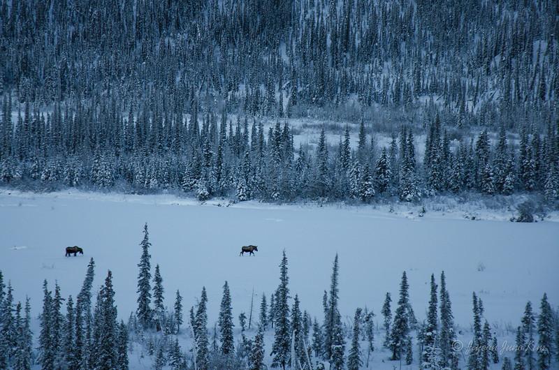USA-Alaska-atigun pass-3058.jpg