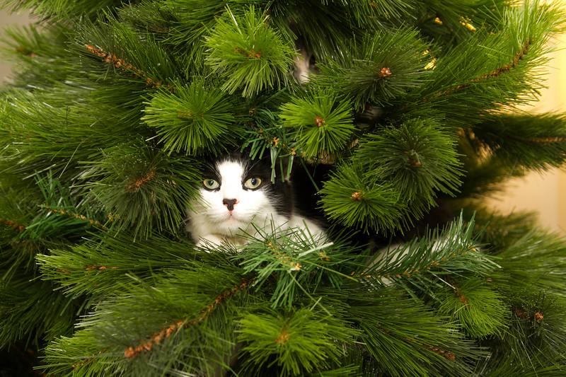Christmas Day 2012-7095.jpg